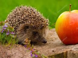 Porcupine Eats Pumpkin by Hedgehog And Apple On The Tree Stump U2014 Stock Photo Smaglov 1312391