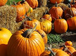 Hillcrest Farms Pumpkin Patch by 463 Best Mice In My Pumpkin Patch Images On Pinterest
