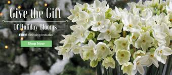 easy to grow bulbs buy flower bulbs