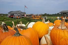 Best Pumpkin Apple Picking Long Island Ny by U Pick Farm Milk Pail Orchard Hamptons Farm Stand Market U0026 U