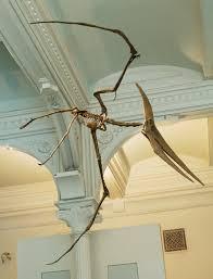 Bones Sinking Like Stones Meaning by Pteranodon Wikipedia
