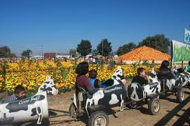 Uesugi Farms Pumpkin Patch by Hey Amadea Enjoy The Little Things October 2012