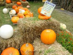 Pumpkin Patch Fredericksburg Va by Fall Festivals Across The Nation The Domestic Life Stylist