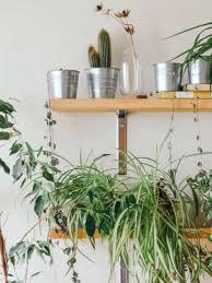 pflanzenregal westwing