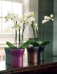 pots de fleurs indoor notre sélection décoration