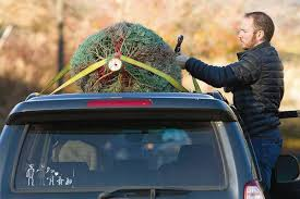 Christmas Tree Cataract Seen In by Phs Boosters And O U0027 Christmas Tree Together Again Local Dnews Com