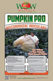 Worlds Heaviest Pumpkin In Kg by 28 Best Growing Is Love Images On Pinterest