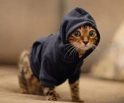 cat hoodies hoodies