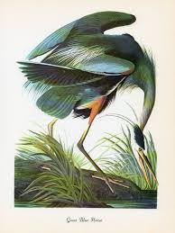 John James Audubon PrintsAudubon BirdsJohn