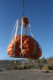 Pumpkin Patch In Colorado Springs Co 2013 by Colorado Pumpkins Giant Pumpkin Weigh Offs Rocky Mountain Giant