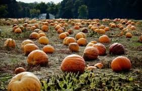 Pumpkin Farms In Southern Maryland by Best Pumpkin Patches In Southern California K Earth 101