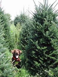Kinds Of Christmas Trees by 7 Best Christmas Tree Farm Animals Images On Pinterest All Kinds