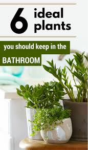 Best Plant For Bathroom Feng Shui by Best 25 Plants In Bathroom Ideas On Pinterest Bathroom Plants