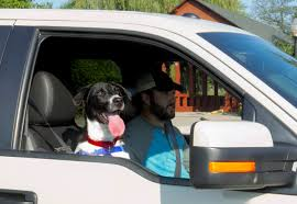 100 Truck Dog Ford The Humane Association Tell Pickup Owners Keep S Out Of