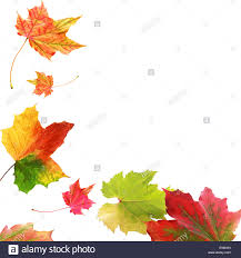 Corner border of colorful vivid variegated autumn or fall leaves with multicolored patterns with plenty of