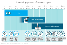 Resolving power of microscopes — Science Learning Hub