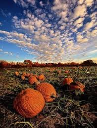 Best Pumpkin Patches Near Milwaukee by Colder Weather
