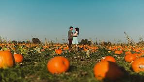 Pumpkin Patch Marble Falls by 5 Great Hill Country Fall U0027date Night U0027 Ideas