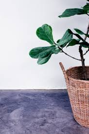 Good Plants For Bathrooms Nz by Green House