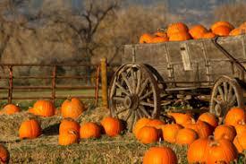 Best Pumpkin Patches Near Milwaukee by Pumpkin Patch Cedarburg Pick Your Own Pumpkins Grafton Pumpkin