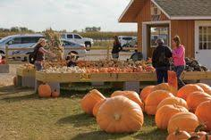 Bengtson Pumpkin Farm Chicago by Bengtson U0027s Pumpkin Farm Bring Your Family Friends And Smiles