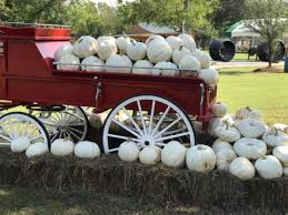 Pumpkin Patches Near Dallas Tx 2015 by 10 Texas Pumpkin Patches That Are Worth The Trip