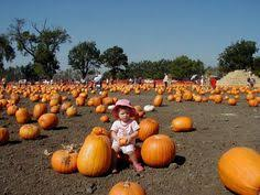 Alameda Pumpkin Patch 2015 by Calm Waters Best Beaches For Kids Bay Area San Francisco Bay