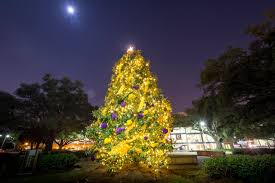 The LSU Christmas Tree Is Lit Up And Stands Alone Against Night Sky