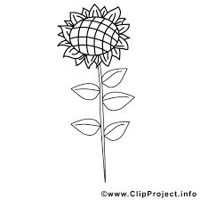 Coloriage Fleur Tournesol à Imprimer Pour Les Enfants Dessin Fleur