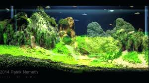 Ada Aquascaping Contest – Homedesignpicture.win King5com Fding Zen Through Aquascapes The Worlds Newest Photos By Pacific Aquascape Flickr Hive Mind Pacific Aquascape 28 Images Westin Photo Courtesy Of Christian Another Beautiful Pool Aquascapes For Luxury Living In Swimming Pool Contractors In Oahu Hi Aquascapes Ada Aquascaping Contest Homedesignpicturewin Submerged Jungle Fekete Tamas Awards Jungle 241 Best Aquatic Garden On Pinterest Aquascaping 111 Amazing Aquariums And The666 Extreme18