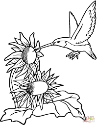 Click The Hummingbird With Sunflowers Coloring Pages