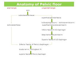 Pelvic Floor Dysfunction Symptoms Constipation by 28 Pelvic Floor Dysfunction Symptoms Constipation T Ahadi