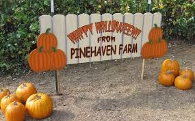 Pumpkin Patch Roseville Ca by The 12 Best Pumpkin Patches In Minnesota For 2016