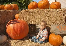 City Of Pomona Pumpkin Patch by Pumpkin Patch Offers Seasonal Fun Campus Times