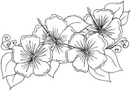 Best Tropical Flower Coloring Pages 64 With Additional Line Drawings