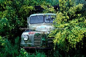 An Old Battered Truck Parked Among A Flowering Bush In New Zealand I Made
