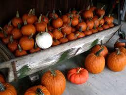 Maryland Pumpkin Patches Near Baltimore by Pumpkin Patch Carroll County Maryland Hayrides Eldersburg Md Pick