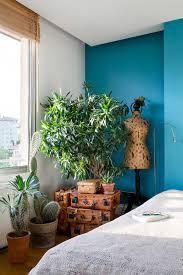 aloe vera für einsteiger wohnen in grün wohnbuch