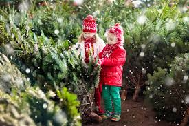 Nordmann Fir Christmas Tree Nj by 9 U Cut Christmas Tree Farms Within 90 Minutes Of Portland