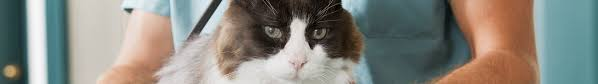 arnett animal hospital waunakee veterinary clinic veterinarian in waunakee wi usa