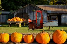 Wheatland California Pumpkin Patch by Find Corn Mazes In Wheatland California Bishop U0027s Pumpkin Farm In