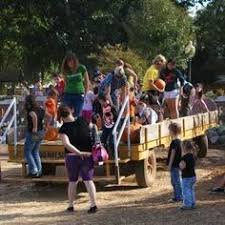 Wheatland California Pumpkin Patch by Hayrides At Bishop U0027s Pumpkin Farm In Wheatland California Farm