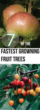 Best 25+ Fast Growing Fruit Trees Ideas On Pinterest | Fruit Tree ... Garden Design Trees For Traing Adds Beauty And Function Inside 90 Best Fruit Images On Pinterest Trees Backyards Best 25 Fast Growing Fruit Ideas Tree Wonderful Large Backyard Plum Tree Pics Orchards Benicia Community Gardens With With Cclusion How To Grow Which Apple For Small Garden 35 Citrus Homegrown Stone Sunset Mobile Enjoy The Full Of Flowers Alamedasan