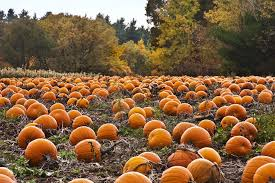 Pumpkin Patch Jacksonville Al by 15 Reasons To Look Forward To The Fall