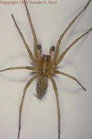 Remains Of The Day Spiders by Hobo Spider