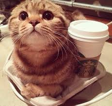 cat coffee coffee and cats are the combo to help you the week