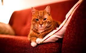 cat sofa cat sofa 96 with cat sofa jinanhongyu