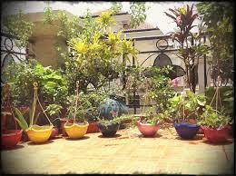 Gardening India Balcony Garden Ideas Bsm The