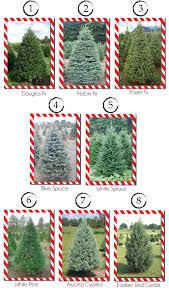 Best Christmas Tree Type Lizardmediaco Regarding