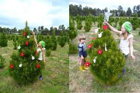Best Real Christmas Tree Type Canada by The Real Christmas Tree Farm Christmas Lights Decoration